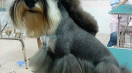 Dog Grooming Wallpaper For IPhone