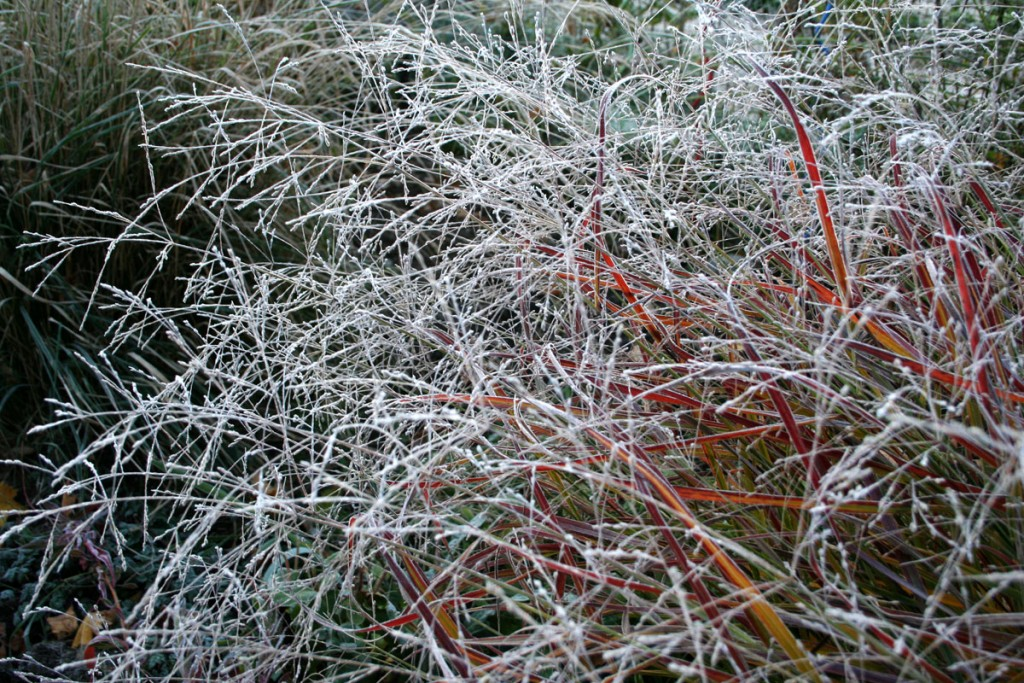 Frost Grass wallpapers HD