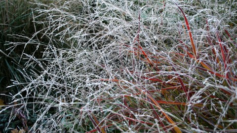 Frost Grass wallpapers high quality