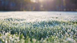 Frost Grass Photo Download