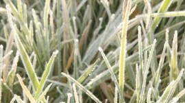 Frost Grass Wallpaper For Android