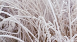 Frost Grass Wallpaper For Mobile