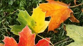 Frosting Autumn Leaves Desktop Wallpaper
