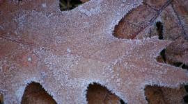 Frosting Autumn Leaves Desktop Wallpaper HD