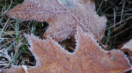 Frosting Autumn Leaves Photo Download