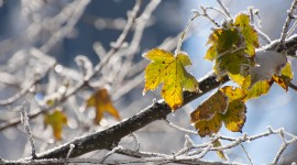 Frosting Autumn Leaves Wallpaper