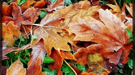 Frosting Autumn Leaves Wallpaper For PC