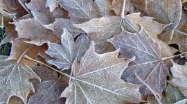 Frosting Autumn Leaves Wallpaper Full HD