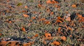 Frosting Autumn Leaves Wallpaper Full HD#1