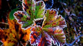 Frosting Autumn Leaves Wallpaper Gallery