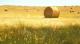 Hay Wallpaper Gallery