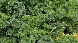 Kale Сabbage Wallpaper For PC