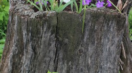 Old Stump Wallpaper For IPhone#2