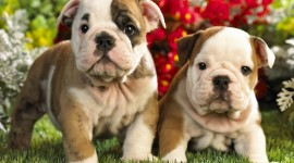 Pets Wallpaper Download