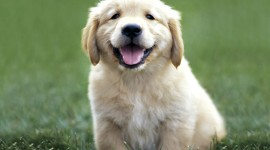 Pets Wallpaper Free