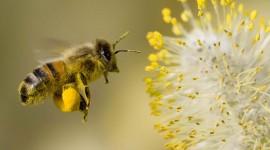 Pollen Best Wallpaper