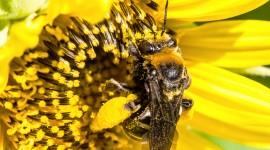 Pollen Wallpaper 1080p