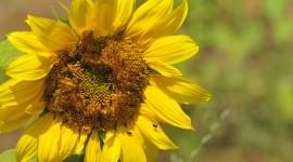 Pollen Wallpaper Download