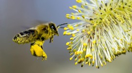 Pollen Wallpaper Download Free