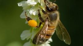 Pollen Wallpaper For IPhone 6