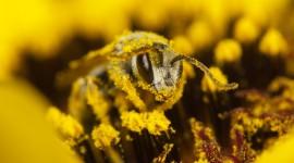 Pollen Wallpaper Full HD