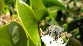 Pollen Wallpaper Gallery