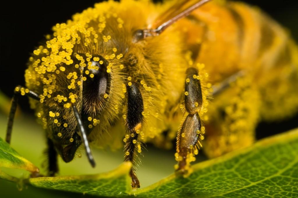 Pollen wallpapers HD