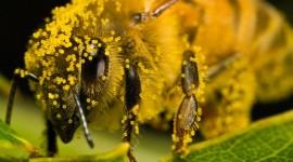 Pollen Wallpaper High Definition