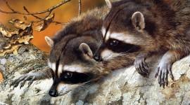 Raccoon Wallpaper Download Free