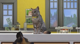 Sims 4 Cats & Dogs Wallpaper Full HD