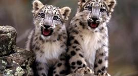 Snow Leopard Desktop Wallpaper HD