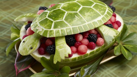 Turtle Salad wallpapers high quality