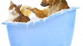 Wash The Dog Desktop Wallpaper HD