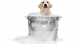 Wash The Dog Photo Download