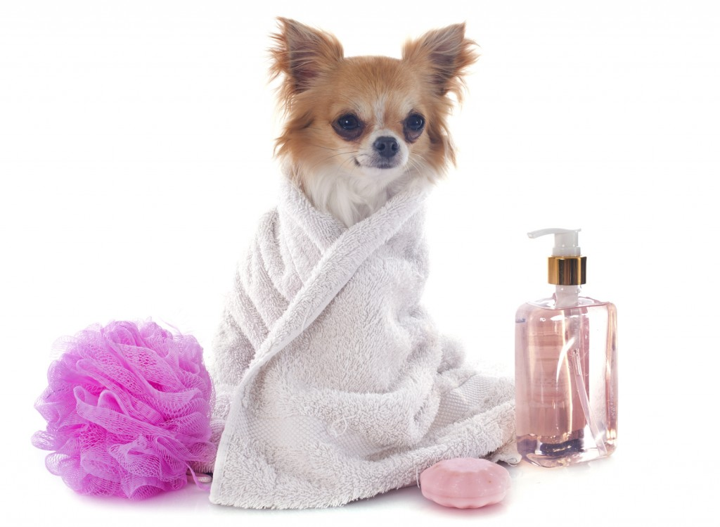 Wash The Dog wallpapers HD