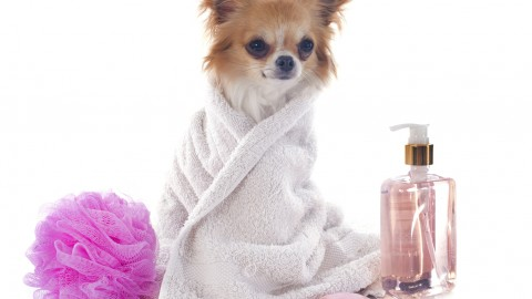 Wash The Dog wallpapers high quality