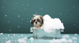 Wash The Dog Wallpaper Free