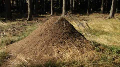 Anthill wallpapers high quality