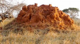 Anthill Wallpaper High Definition
