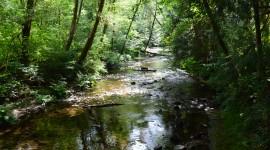 Creek Wallpaper Background