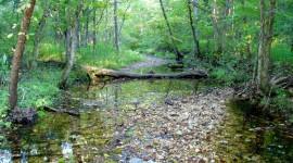 Creek Wallpaper Download Free