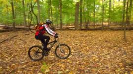 Cycling In Autumn Desktop Wallpaper HD