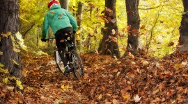 Cycling In Autumn Wallpaper Background