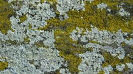 Lichen Best Wallpaper