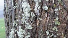 Lichen Wallpaper Download