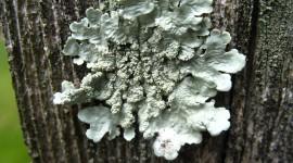 Lichen Wallpaper Download Free