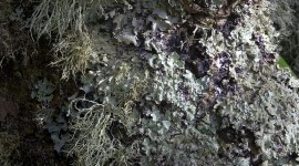 Lichen Wallpaper For IPhone 6