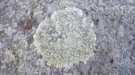 Lichen Wallpaper Gallery