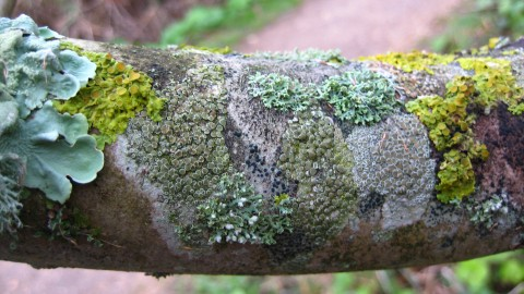 Lichen wallpapers high quality