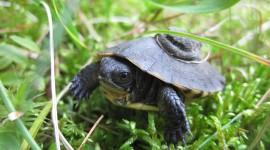 Newborn Turtles Best Wallpaper
